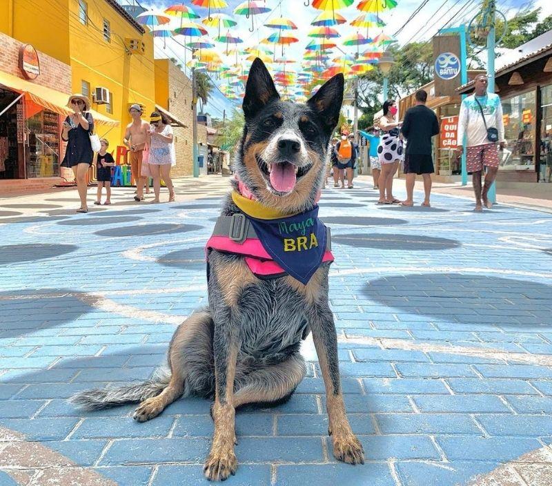 Maya Surf Dog